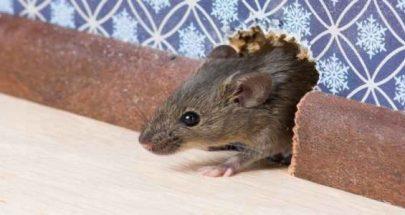 يطلق الفئران داخل الفنادق... للحصول على إقامة مجانية image