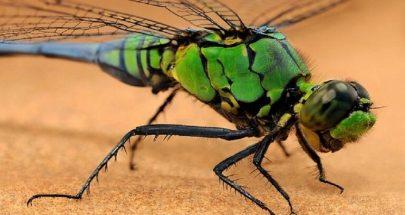 بالصور: سحر الحشرات المذهل في الصين image