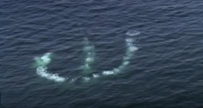 بعد توقعات انقراضه... عودة أكبر حيتان العالم إلى المحيط image