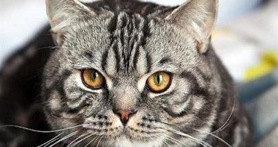 وفاة امرأة بعد أن لحستها قطة! image