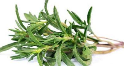 الشاي الأخضر علاج فعّال لتقوية الشعر image