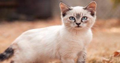 كورونا ينتقل من الإنسان إلى القطط! image