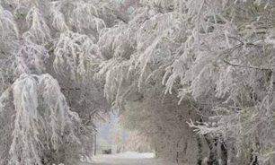 الجبهة الأبرد يوم غد… متى تنحسر العاصفة؟ image