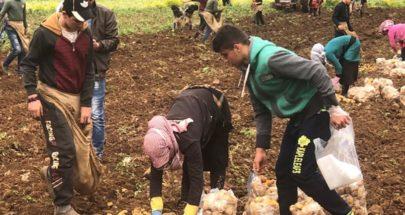 رئيس الجمعية التعاونية لمزارعي البطاطا في عكار يعلن بدء الموسم image