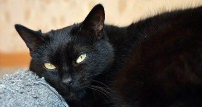 العلماء يعثرون على فيروس كورونا في القطط في ووهان image