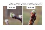 مصلحة الابحاث العلمية الزراعية: لانذار مبكر الى مزارعي التفاح والعنب image
