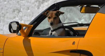 مطاردة بوليسية دراماتيكية... سائق تحت تأثير المخدرات وكلبه يقود بسرعة جنونية! image
