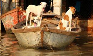 رسميا... رفع الكلاب والقطط من قائمة الحيوانات التي يمكن أكلها في الصين! image