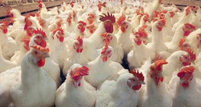 دجاج تحت التقشف image
