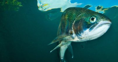 حالة غريبة: سمكة بأسنان إنسان! image