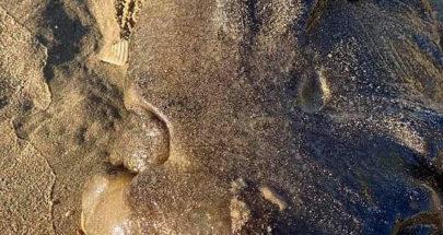 مخلوق غريب يظهر فجأة على شاطئ أسترالي ويحير العلماء! image