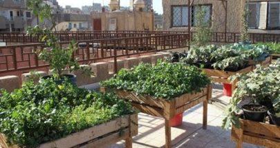 الزراعة على الاسطح... ومشكلة المياه! image