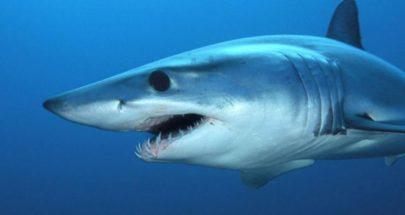 """بقايا سمكة قرش """"عملاقة"""" مكتشفة في ألمانيا تظهر خفايا مثيرة للإعجاب! image"""