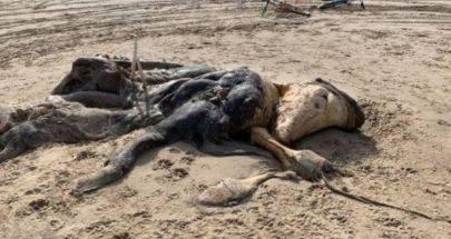 مخلوق غريب بطول 15 قدمًا... على الشاطئ image