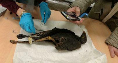 ما مصدر مومياوات الطيور في المقابر المصرية؟ image