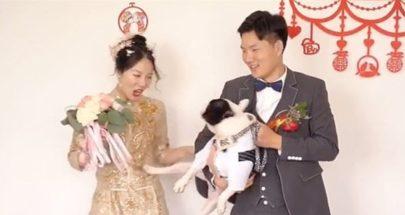 كلب يركل صاحبته العروس يوم زفافها... والسبب مفاجئ! (فيديو) image