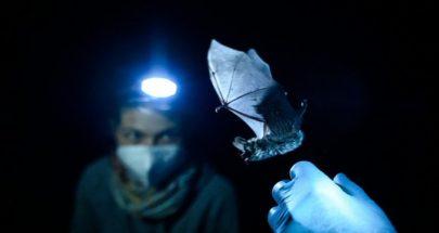 اكتشاف فيروسات تاجية في الخفافيش بروسيا image