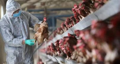 انفلونزا الطيور يظهر في هولندا! image