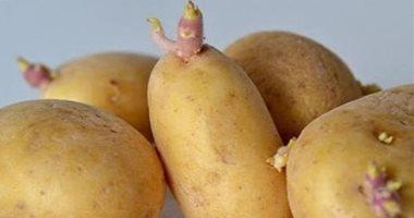 تعرف على فوائد البطاطا للصحة دعم القلب ومنع هشاشه العظام image