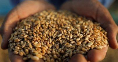 مصر تشتري آلاف الأطنان من القمح الروسي image
