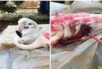 بالصور جريمة بيئية جديدة في لبنان... مجزرة بحق طيور الفلامينغو الجميلة! image