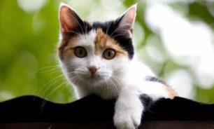 بعد الكلبين.. قطة تنضم للبيت الأبيض مع انتقال عائلة بايدن image