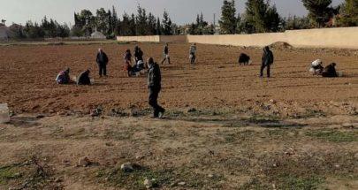 انطلاق مشروع زراعة الثوم في سهول القاع image