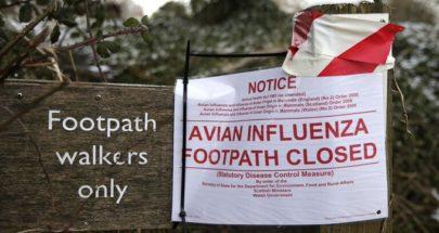 بريطانيا تكتشف بؤرة جديدة لإنفلونزا الطيور في أراضيها image