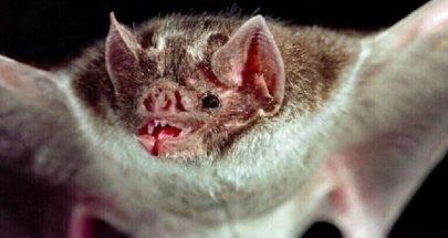 الغارديان: خفافيش في الصين تحمل أنواعا أخرى من فيروس كورونا image