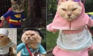 إندونيسي يصمم أزياء مثيرة للقطط! image