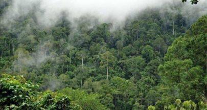 تدمير غابات الأمازون في البرازيل يقفز لأعلى مستوى في 12 عاما image