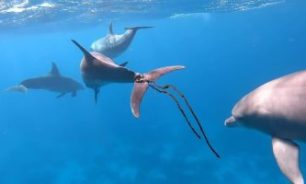 مركبات مشتقة من الرخويات البحرية أدوية محتملة لكورونا image