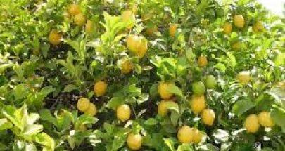شو خص الليمون image