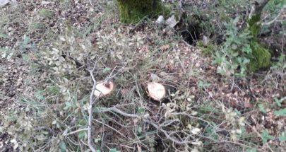 مجهولون قطعوا أشجار معمرة من السنديان في جبيل image