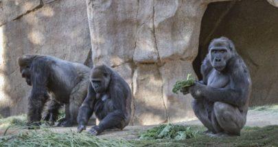 """حملة تلقيح ضد كورونا في حديقة حيوانات """"سان دييغو"""" image"""