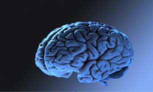 العلماء يكتشفون بروتينا يمكن أن يساعد الناس على محو الذكريات السيئة image