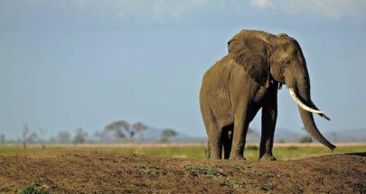 فيل يرفع دعوى على حديقته! image