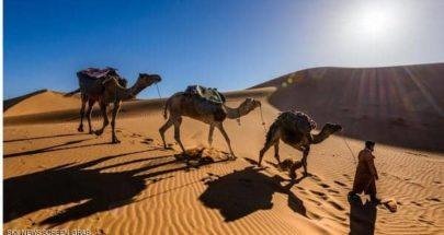 لماذا لا يعطش الجمل العربي؟.. دراسة تكشف السر الغامض image