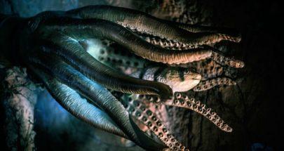 بالفيديو: إكتشاف حيوان مازال حياً منذ العصر الجوراسي image