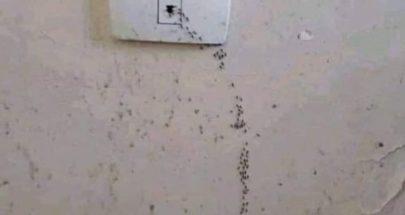 حتى النمل عندو ثقة بشركة الكهربا image