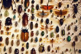 نوع من الحشرات ينقرض بسبب البشر ! image