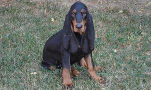"""كلب يدخل موسوعة """"غينيس"""" (صورة) image"""