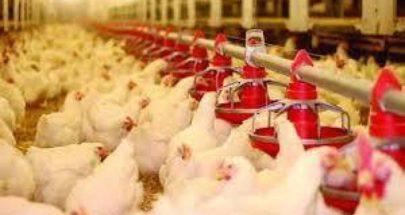 """أسعارٌ جديدة لـ """"منتجات الدجاج""""... كم بلغت؟ image"""