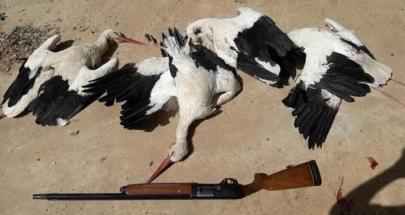 أزمات لبنان أنقذت طيوره ونكبت صياديه image