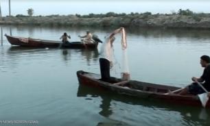 فيروس يصيب أسماك العراق image
