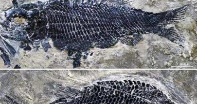عمرها 244 مليون عام.. اكتشاف أحافير أسماك عظمية منقرضة image