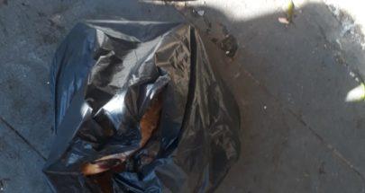بالصور: سمك غير صالح للإستهلاك في صيدا image