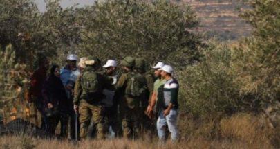 إسرائيل تفتح الحدود أمام مزارعي لبنان لقطف محصول الزيتون image